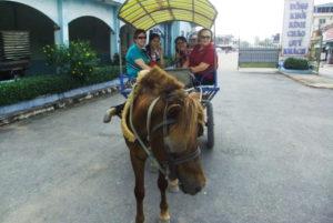 Tour du lịch đi xe ngựa trên đường làng tại Bến Tre