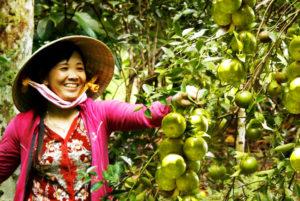 Vườn Trái Cây đặc sản - Du lịch Tiền Giang