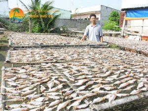 Làng nghề chế biến cá khô Bình Thắng Bình Đại - Du lịch Bến Tre Tiền Giang