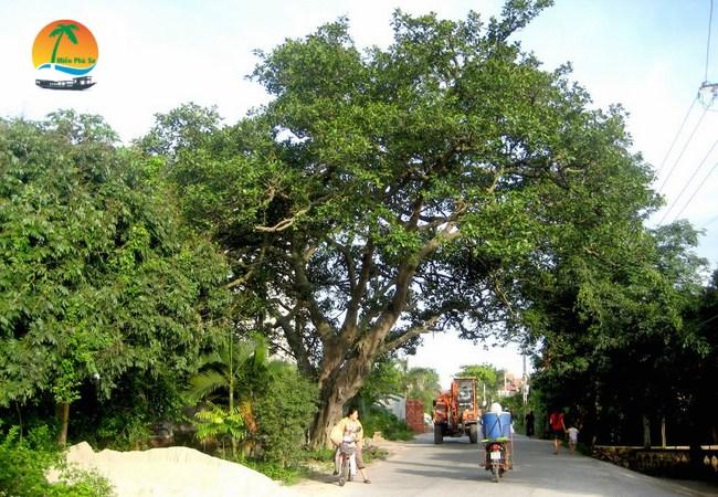 Ngã ba cây da đôi - Du lịch Bến Tre