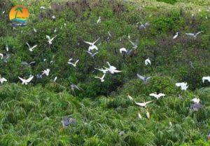 Sân chim Vàm Hồ - Du lịch Bến Tre
