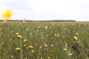 Về Tràm Chim Ngắm Hoa Hoàng Đầu Ấn