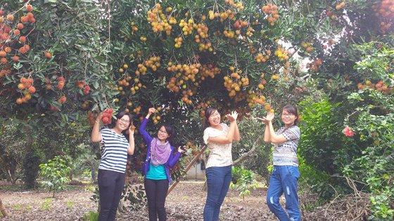 Vườn chôm chôm Tân Phú Bến Tre
