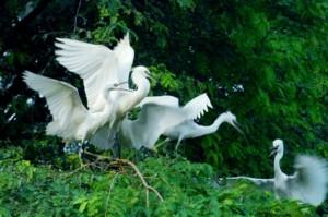 Sân chim Vàm Hồ, xã Tân Mỹ, Ba Tri