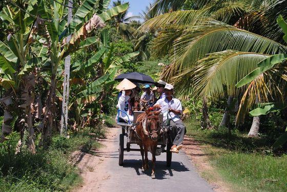 Đi xe ngựa tại Châu Thành Bến Tre