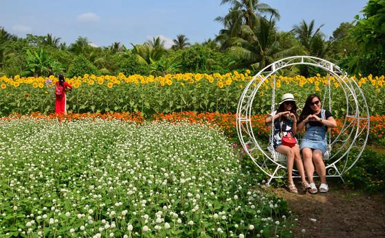 Vườn hoa Mãn Đình Hồng đang nở rộ