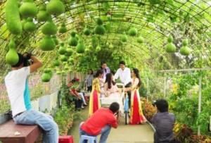 Chụp ảnh tại Vườn hoa Mãn Đình Hồng