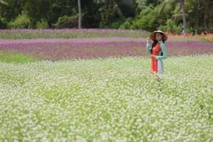 Hoa Bách Nhật - Vườn hoa Mãn Đình Hồng