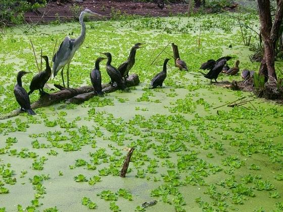 Khám phá sân chim Vàm Hồ