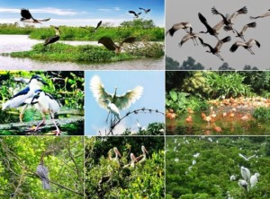 Khu du lịch sinh thái Sân Chim Vàm Hồ