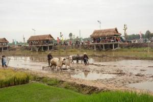 Tái hiện hoạt động sản xuất lúa nước