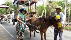 Đi xe ngựa trên cồn Thới Sơn