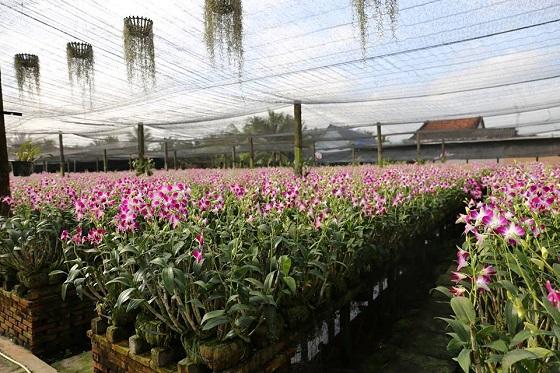 Vườn lan trong khuôn viên của Điền lan thôn Trang