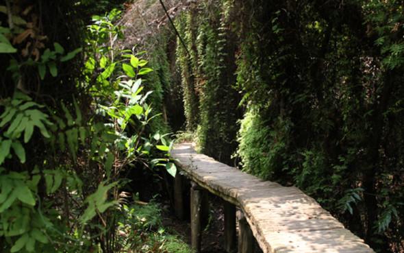 Khu sinh thái Xẻo Quýt - Những điểm du lịch mới nhất ở Miền Tây