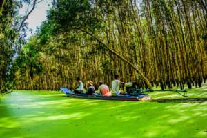Rừng tràm Trà Sư ờ An Giang - Những điểm du lịch mới nhất ở Miền Tây