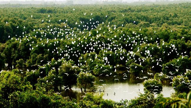 Khu sinh thái Tràm Chim - Đồng Tháp